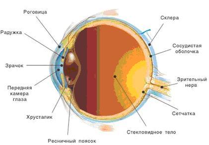 Расширение зрачка при повышении внутриглазного давления